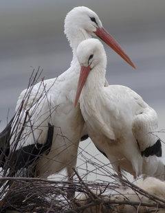 В Омске благоустроят «Птичью гавань»