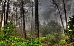 В Мурманской области восстанавливают леса