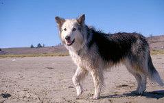 В 70 пунктах Оренбуржья имеется опасность бешенства животных