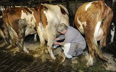 Алтайский край в лидерах по производству молока