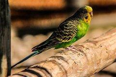 В Свердловской области покупатель волнистого попугайчика зарезал продавца зоомагазина