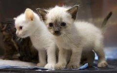 Жестокое обращение с животными: наказание станет жестче