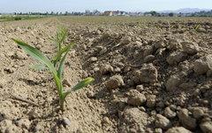 Сельхозпроизводителям Югры окажут финансовую поддержку