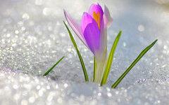 В Центральную Россию весна придет к апрелю