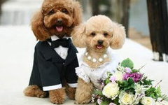 Омские модницы готовятся к сезону свадеб