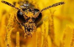 Алтайские пчеловоды могут рассчитывать на господдержку